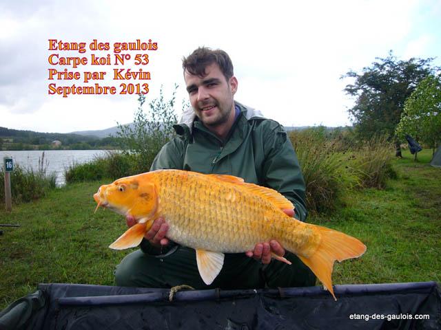 carpe-Koi-4kg500-kevin-oct-2013_zoo