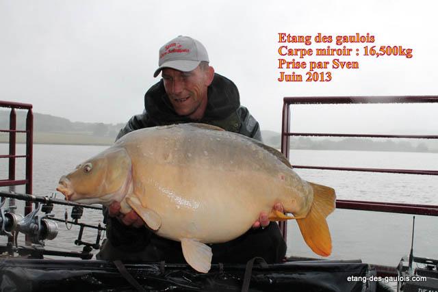 carpe-miroir-16kg500-sven-juin-2013_zoo