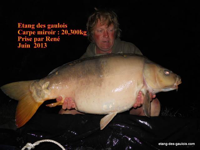 carpe-miroir-20kg300-rene-juin-2013_zoo