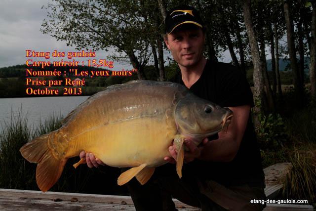 carpe-miroir-yeux-noirs-15kg500-Rene-oct-2013_zoo