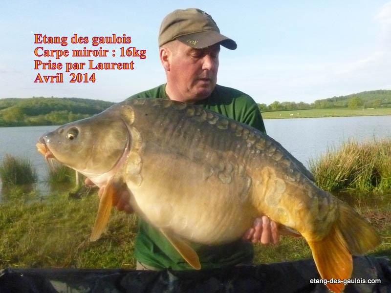 carpe-miroir-16kg-laurent-avril-2014