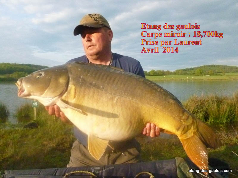 carpe-miroir-18kg700-laurent-avril-2014